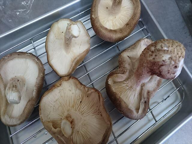 干しキノコ,作り方,シイタケ