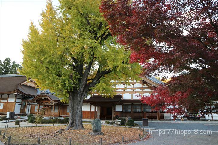 多治見,永保寺,紅葉,iイチョウの木